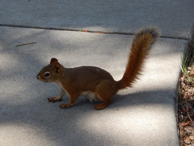A squirrel joined us for lunch.