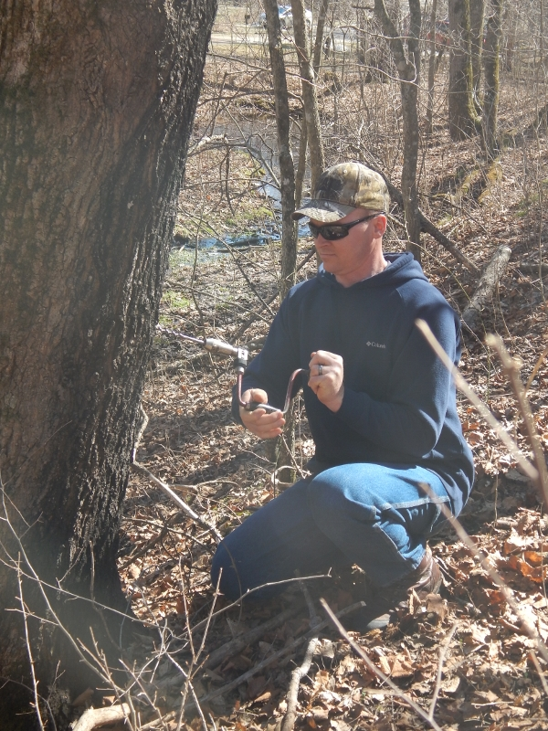 drilling a hole for sugar maple sap