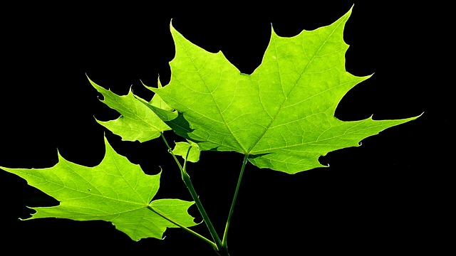 green leaf contrast haiku