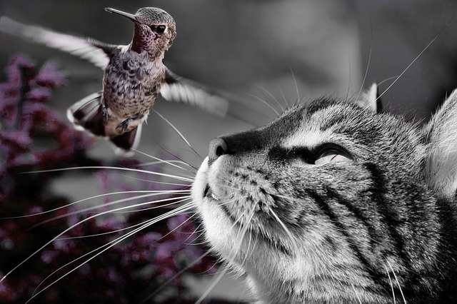cat hummingbird friend haiku